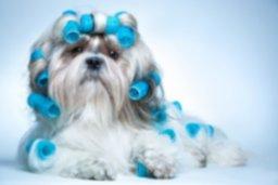 curso-peluqueria-comercial-canina.jpeg